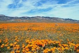 wildflower-322659_1920-2